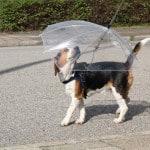 Hundeparaply – pris DKK 79,-