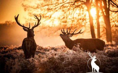Går du på jagt?